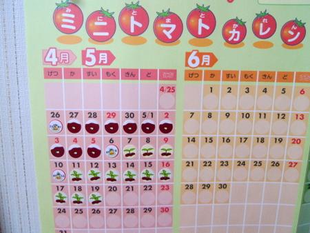 ミニトマト成長カレンダー